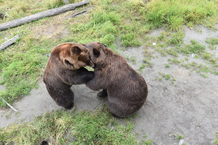 Bears at the Wildlife Center