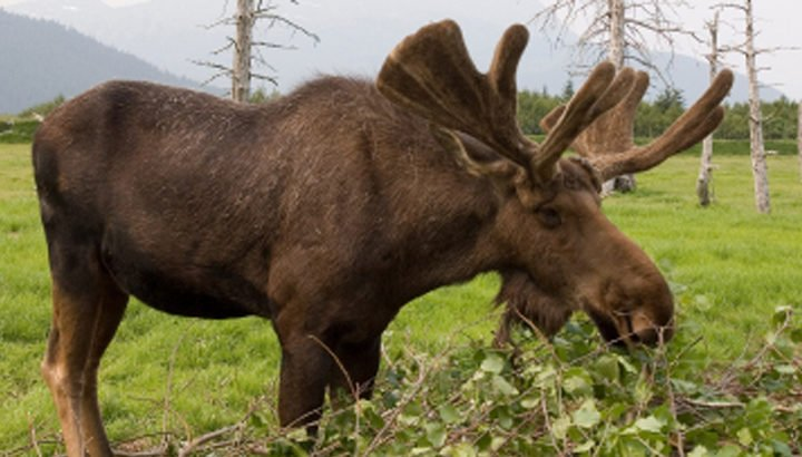 Seward Anchorage Bus Tour with Wildlife Park